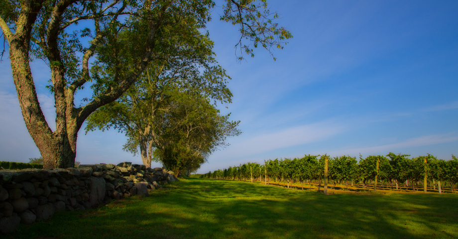 sakonnet-vineyard-large-01